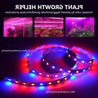 LED Strip Lamp Grow Light With Power Adapter For Vegetables